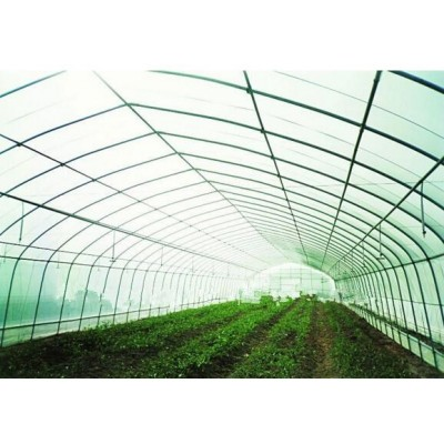 Film Greenhouse for Vegetable Cultivation