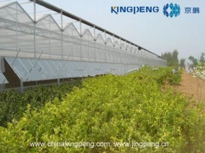 Polycarbonate Sheet Farming Greenhouse